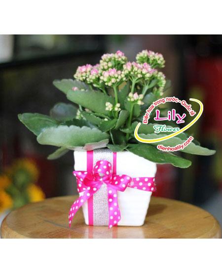 Hoa sống đời tại Điện hoa Lily