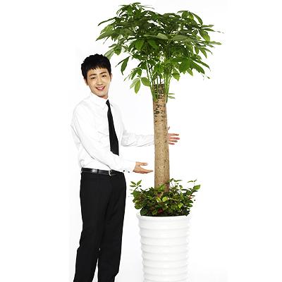 Cây kim ngân là một trong những loài cây mang ý nghĩa phong thủy tốt